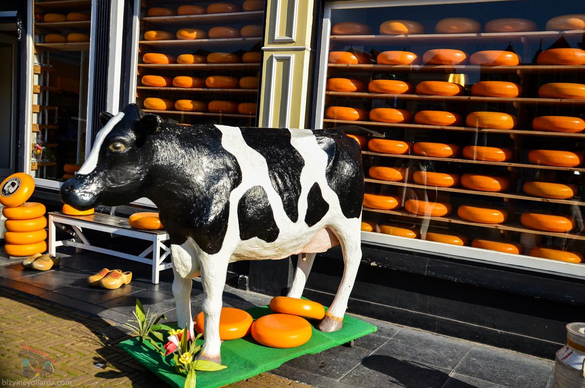 Delft Hollanda Peyniri