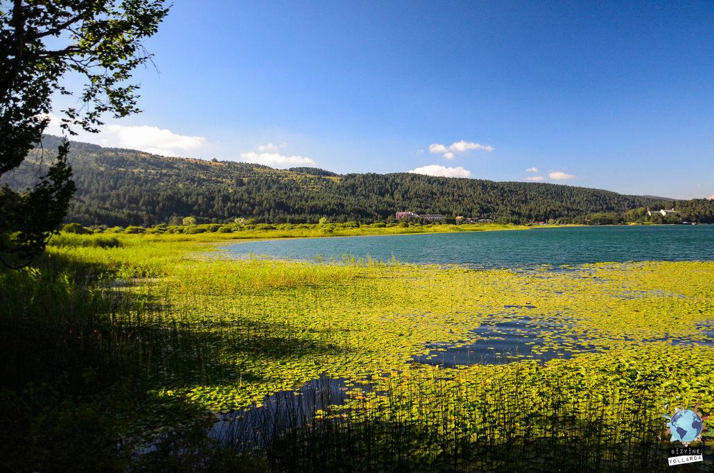 Abant gölü üzerinde hemen her mevsim göreceğiniz nilüfer çiçeklerinin göl ile mükemmel uyumu bizleri büyülüyor.